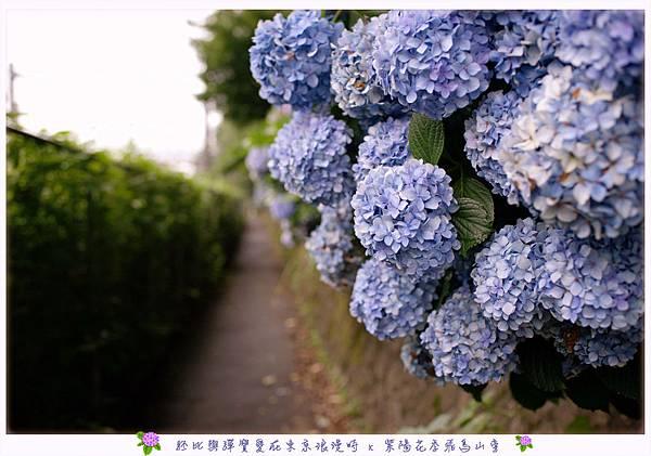 DSC_7618.jpg