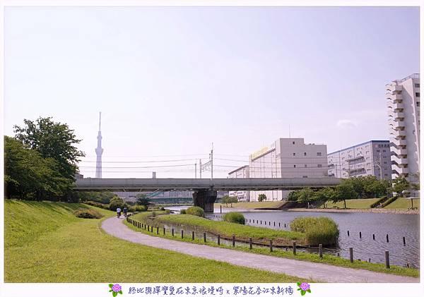 DSC_1489.jpg