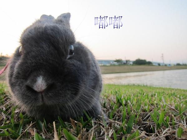 20101212三重堤防蹓兔 (14).jpg
