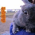 20101212三重堤防蹓兔 (62).jpg