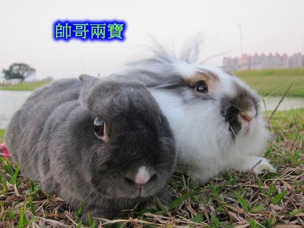 20101212三重堤防蹓兔 (36).jpg