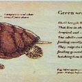 海中生物2
