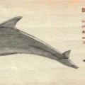 海中生物4