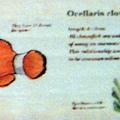 海中生物5