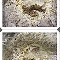 秀珍菇成長日記1