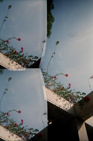 可愛的小紅花@NCTU