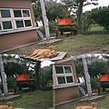 漁港的狗狗睡得好舒服@宜蘭
