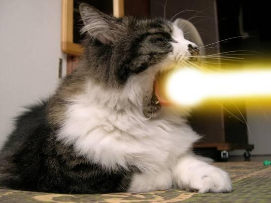 貓咪光波唷~~