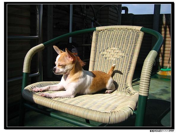IMG_6001曬太陽舒服到睡了~XD.jpg