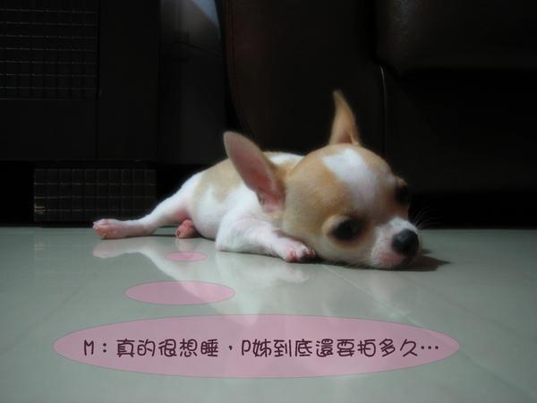 照片 011.jpg