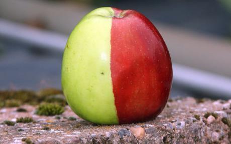 apple-460_1488245c.jpg