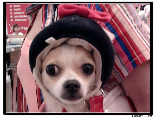 相片0119帽子.jpg