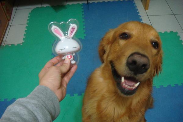 阿co與小兔子