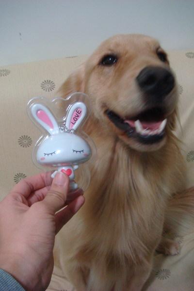 小智障與小兔子