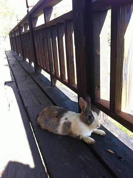 莊園裡的小兔兔