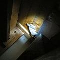 老鼠(布偶)躲在床底下...