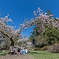 @Washington Park Arboretum