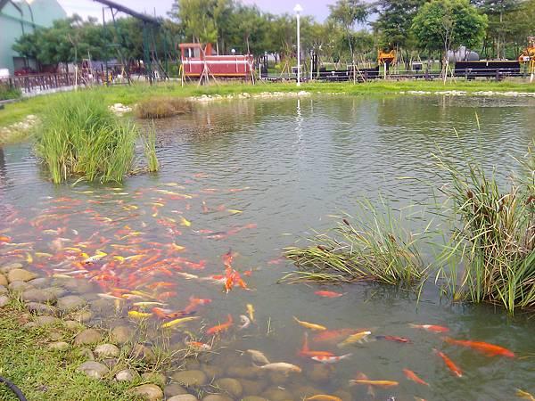 觀光區都流行養鯉魚嗎