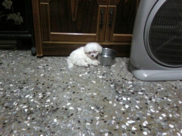 阿笨睡在水碗邊