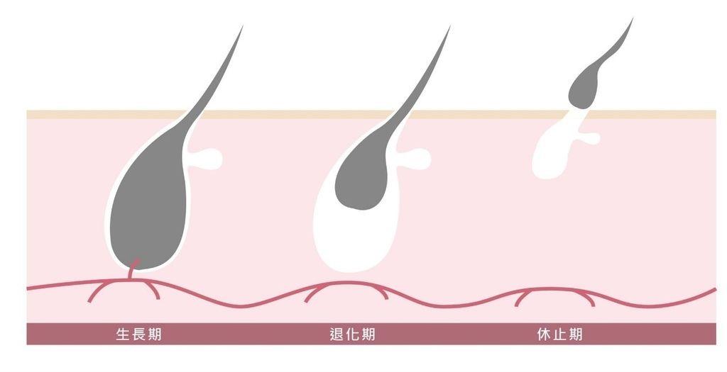 [台南醫美]雷射除毛選對時機,徹底去除濃密體毛,輕鬆打造光滑肌│靚世紀醫美診所.jpg