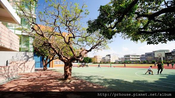 [竹南公所]樹上景