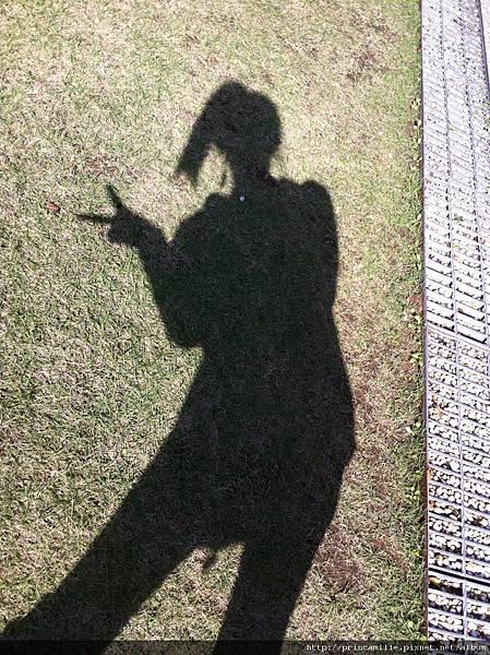 2010.12.18今天太陽好俏皮 可以和可愛的陽光玩躲貓貓~
