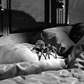 與蜘蛛共枕.BMP