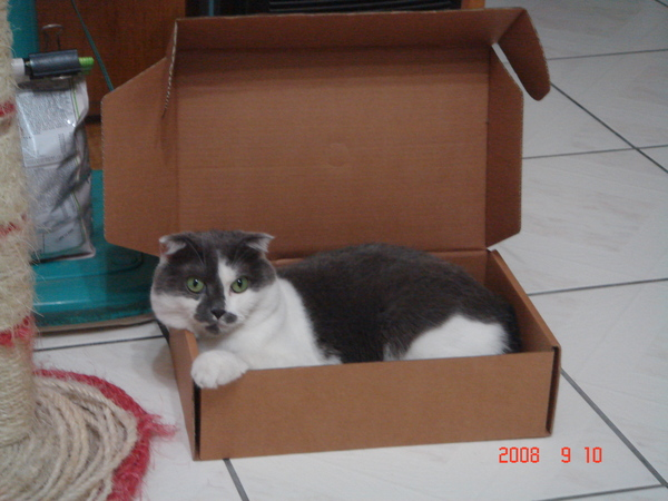 明明盒子很小