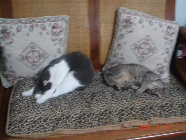 兩隻貓咪睡一起 好酷