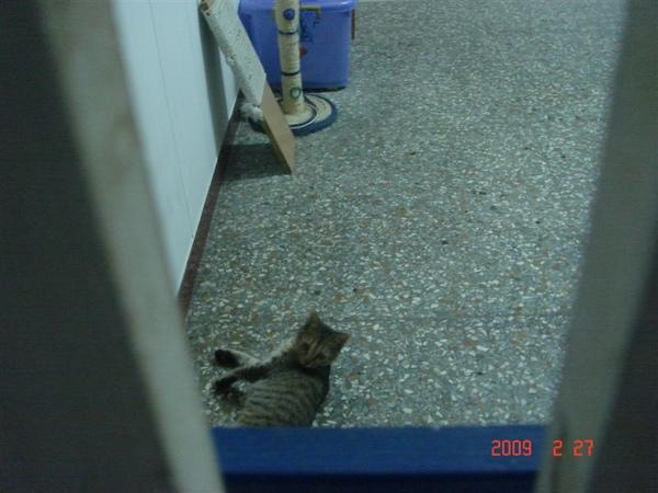 第一隻帶回來試養的貓貓