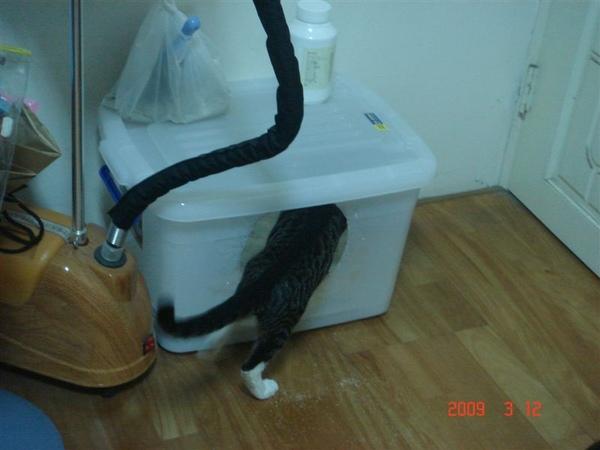 進去貓砂盆
