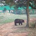最後一站~去排野生動物園區