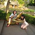 一隻鱷魚被我們搞了很久