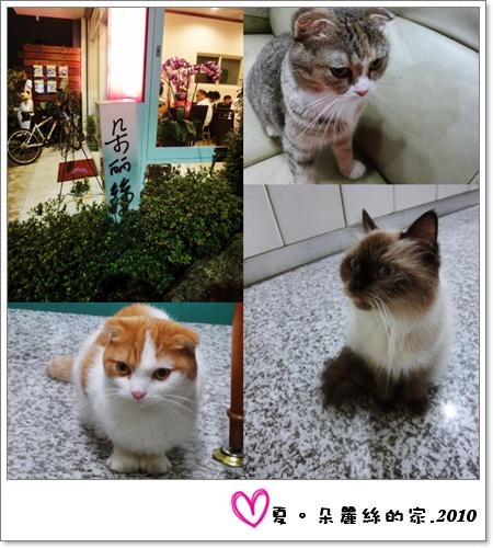 cats-3.jpg