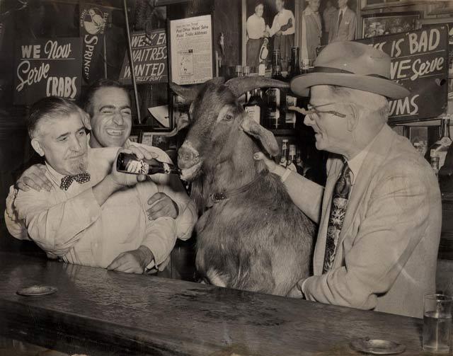 Billy Goat feeding Goat.jpg