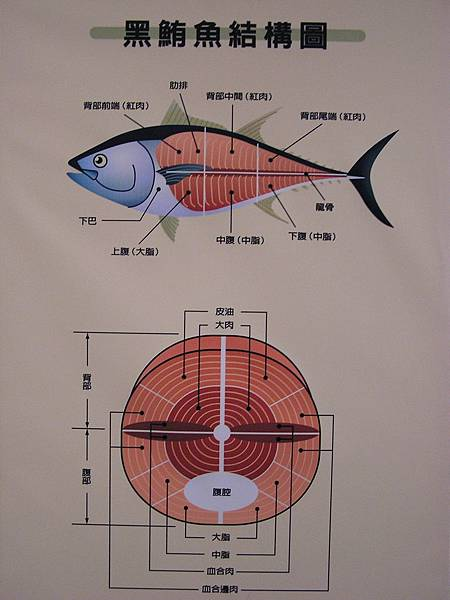大鵬灣食堂 -- 黑鮪魚部位圖