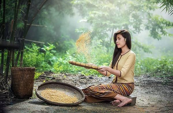 rice-1807554_960_720.jpg
