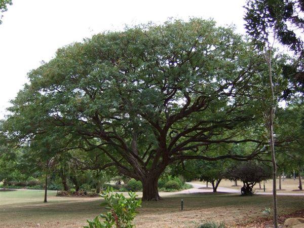 Brisbane Botanic Gardan(植物園)