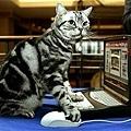 Cat_PETinfo.jpg