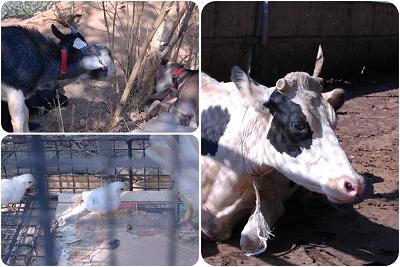 香山牧場的動物(001).jpg