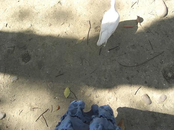 護城河邊追鴿子