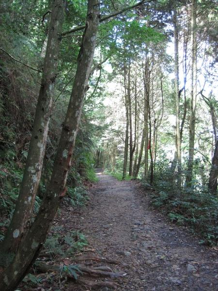 橫嶺山步道1.JPG