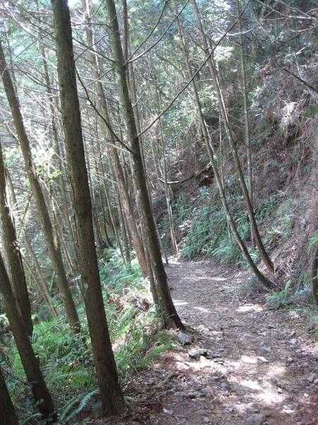 橫嶺山步道2.JPG