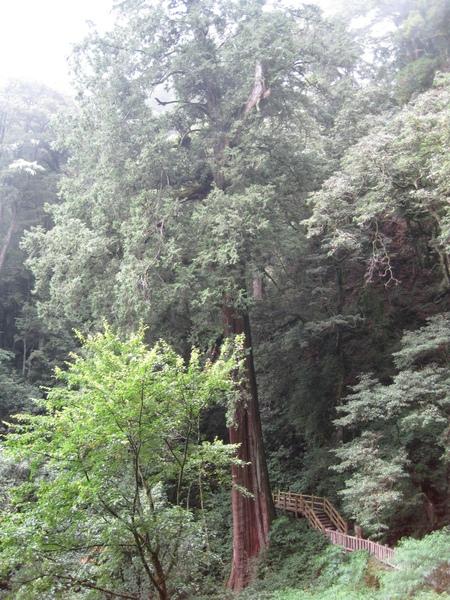 小神木森林浴步道10.JPG