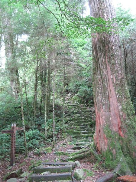 小神木森林浴步道4.JPG