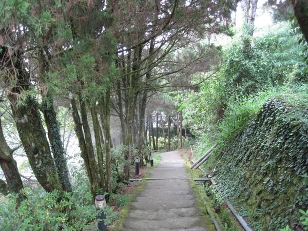 小神木森林浴步道1.JPG