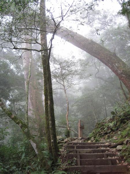 小神木森林浴步道9.JPG