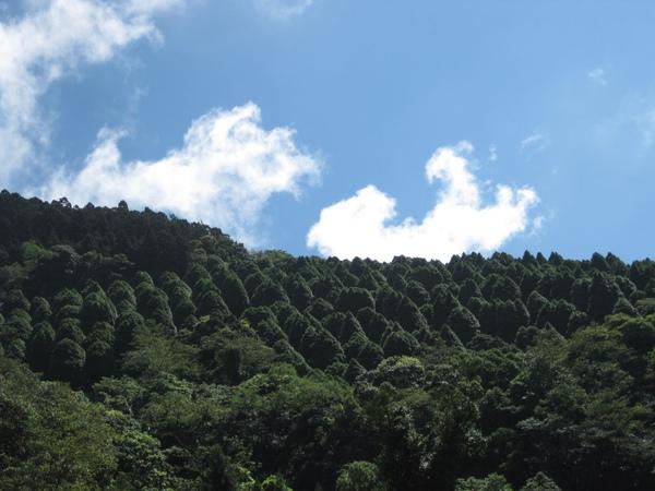 檜木造林.JPG