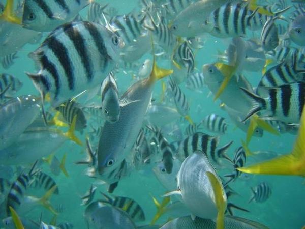 不是水族箱喔!海底魚就是這麼多