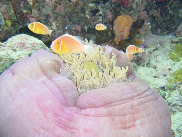 海底生物大觀